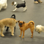 Choosing the Right Dog Breed – A Step By Step Guide