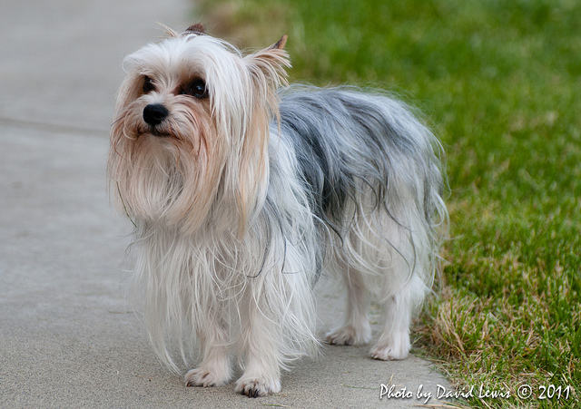 Tips in keeping your small dog in tip-top shape