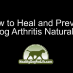 How to Stop Arthritis Pain in Your Small Dog