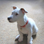 Safe:  Keep Your Puppy and Home from Harm