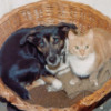 Small dogs can live together with cats peacefully.