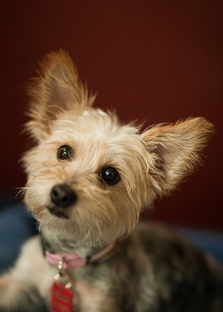 Very Small Dogs For Adoption | Dog Breeds Picture