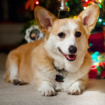 Should You Adopt a Small Dog for Christmas?