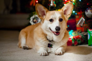 Should You Adopt a Small Dog for Christmas