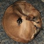 Happy Howlidays: Top 2012 Small Dog Photos