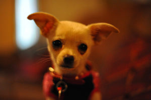 Photographing your small dog can be fun and creative.
