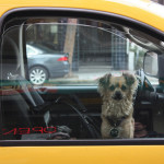 How to Make Your Vehicle Dog Friendly