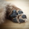Wintertime Pedicure- How to Soften Dry and Cracked Paws for Small Dogs
