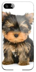 Yorkie_iPhone