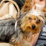 The Latest Top Dog Breeds in America