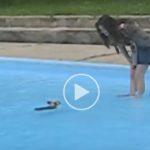 This Yorkie Can Swim!