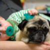 How to Keep Both Your Child and Small Dog Safe