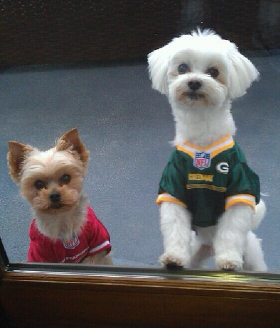 Lisa Guerrero's adorable rescue dogs, Cupcake and Twinkie. Photo courtesy Lisa Guerrero, Twitter