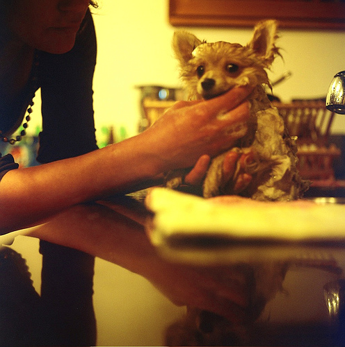 How often to bathe your dog depends on several factors. Photo courtesy Mike Coll, Flickr