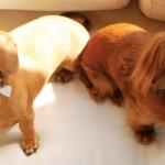 A Touching Story of Small Dog Adoption