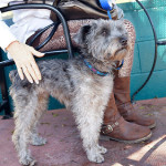 Ready to Adopt? Tips On Finding The Right Small Dog