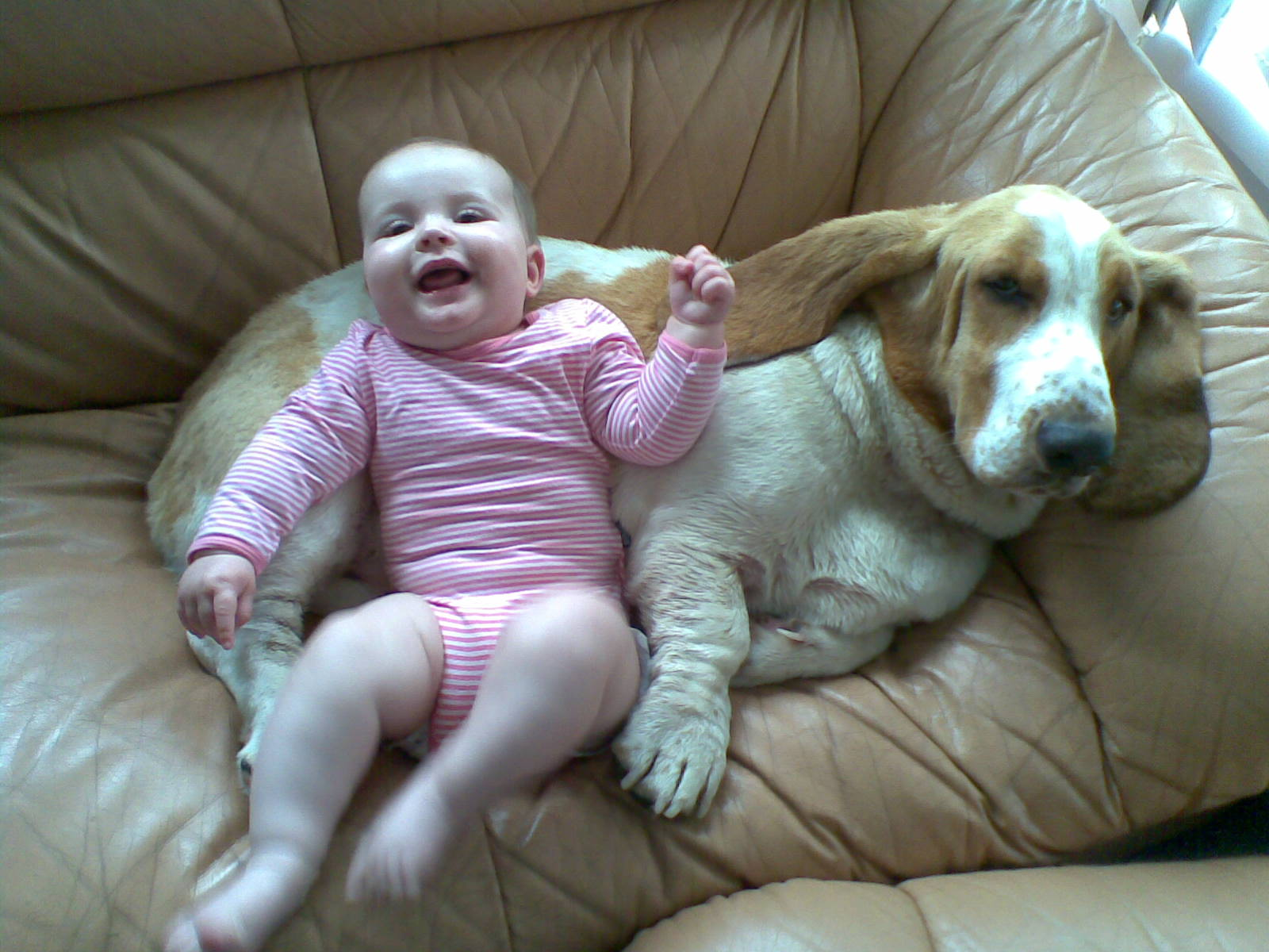 Many dog breeds are great for families, such as the Basset Hound.