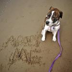 Thinking About Small Dog Adoption? 5 Shelter Myths