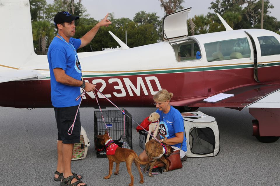 Dog rescue is done by volunteer pilots. Photo courtesy Pilots N Paws, Facebook