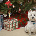 Should You Give a Small Dog As A Gift?