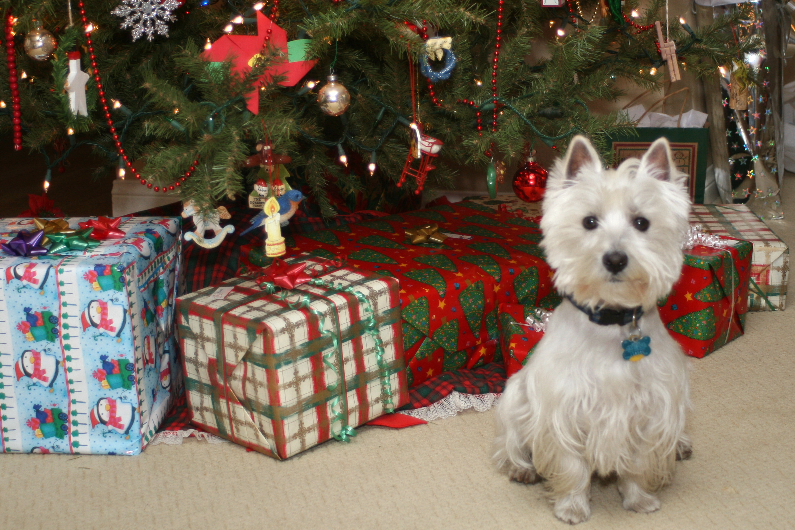 A live dog may or may not be the best gift idea according to the ASPCA.