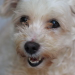 Questions Answered About Rehoming Your Small Dog