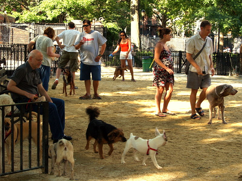 Tompkins Square dog run in New York City is a top spot for dog lovers.