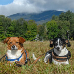 Camping Tips For Your Small Dog
