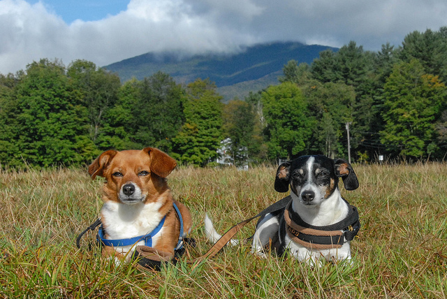 Camping with your dog(s) can be a great experience. Photo courtesy larrygindoff, Flickr