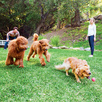 TOMS Founder And His Wife Making A Difference For Dogs
