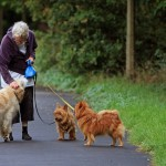 You Can Walk Your Small Dog Every Day