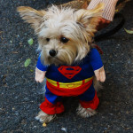 Top Halloween Costumes For Small Dogs in 2014