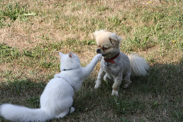 Dogs and cats respond to each other differently than one we might expect, but we can help these two animals get along with the right steps in place.