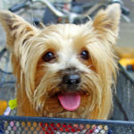 Shopping Etiquette with Your Small Dog