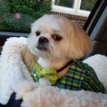 St. Patrick's Day Dog Inspiration