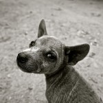 Are You Considering Fostering a Small Dog?