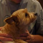 Paralyzed Small Dog Provides Therapy to Veterans