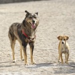 Stray Dogs Get a Little Help from Drones