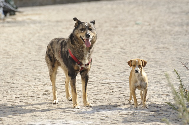 Stray dogs are being found in Houston, Texas with the use of drones.