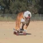 Super Fast Skateboarding Dog
