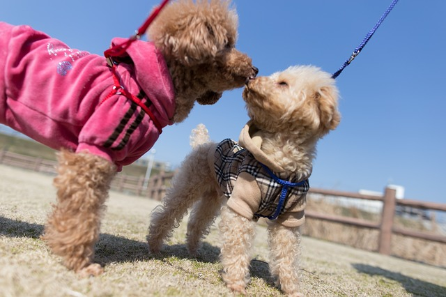 Littermates can be a great choice in dog adoption with the right socialization and training.