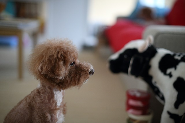 A good grooming can help your fur baby beat the heat this summer.