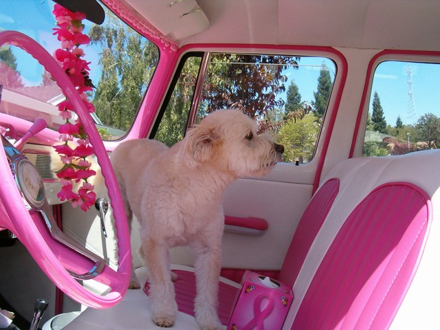 Dogs can quickly overheat in cars, even with the windows cracked.