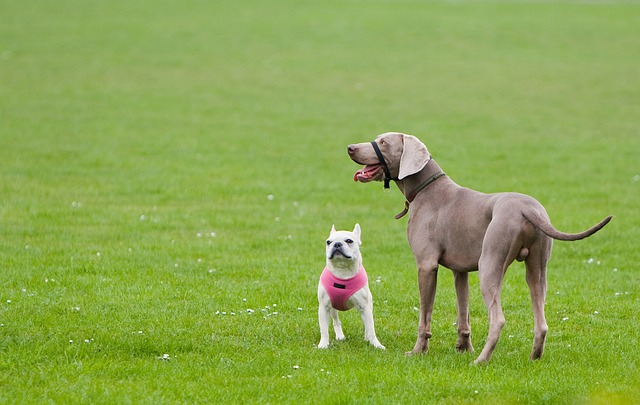 Dogs can be trained to get along no matter what their size.