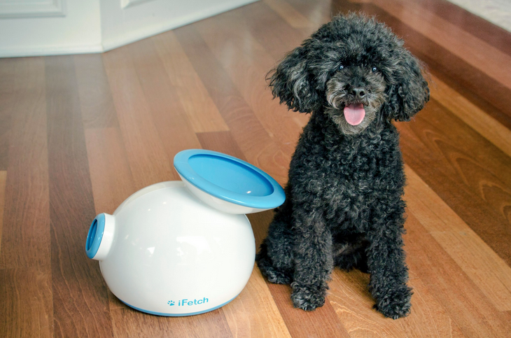 Want An Automatic Ball Throwing Machine For Your Small Dog