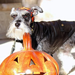 Help Your Small Dog Adjust to Halloween Visitors