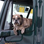 What's the Best Auto Insurance for Your Small Dog?