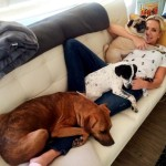 Sports Reporter Has a Passion to Help Dogs in Need