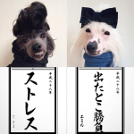 Why Everyone Loves These Two Tokyo Small Dogs