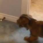 This Puppy Has A Door Problem